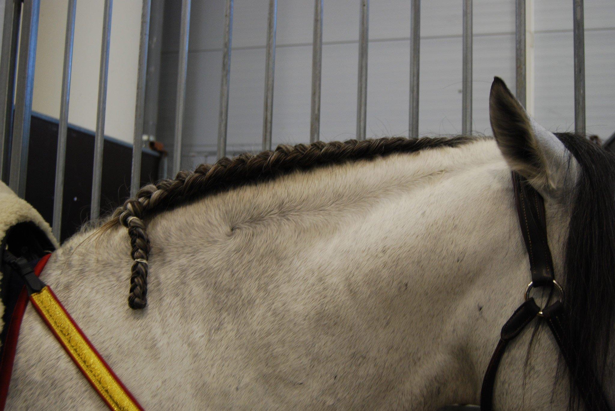 Foto di trecce ai cavalli
