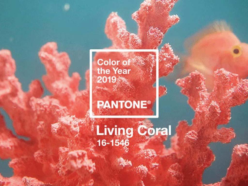 foto pantone 2019, living coral