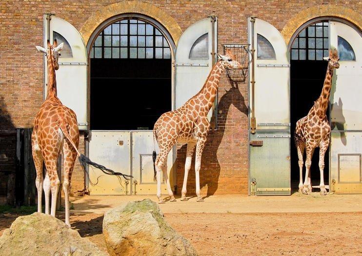 foto Zoo di Londra